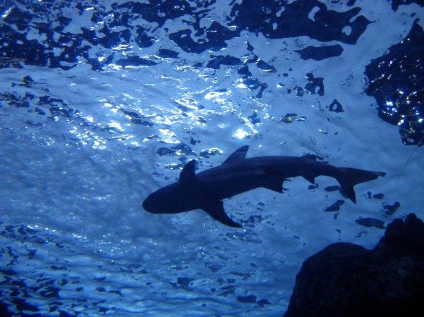 aquarium december 07 016