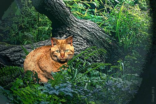 Cat in the Ferns