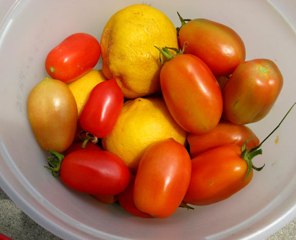 tomatoes and lemons