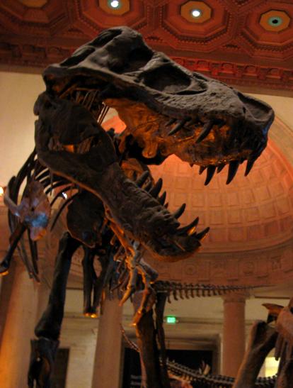 tommy t rex