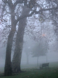fog with bench