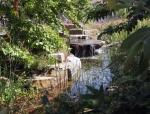 nhm pond