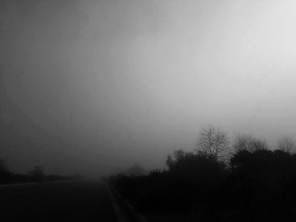 Fog on wetlands